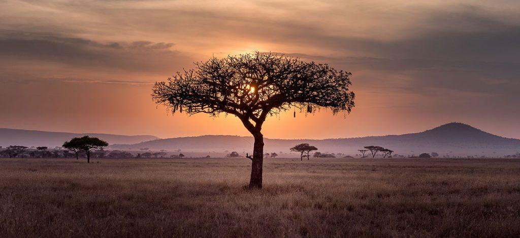 Del 2 al 12 de Abril 2020: 8º Viaje Sagrado de Servicio Planetario – SUDAFRICA